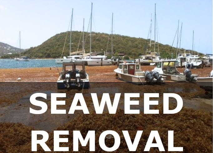 Virgin Islands Seaweed Removal