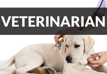 Virgin Islands Veterinarian Vet Pets