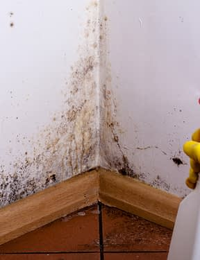 MOLD REMOVAL & REMEDIATION