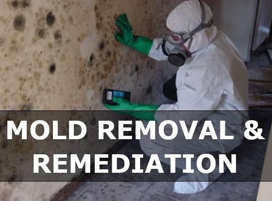 Mold Remediation & Removal Virgin Islands
